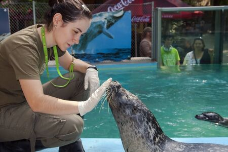 SZEGED, HUNGARY - AUGUST 13  2013  - animal training in the exhibit of Harbor seals  Phoca vitulina  in Szeged Zoo