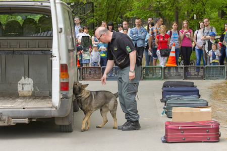 szeged: SZEGED, HUNGARY - APRIL 26. 2015 - Excise officer (NAV) holds a presendation with a drug detection dog in the Earth day event in Szeged Zoo.