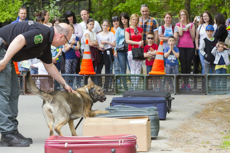 excise: SZEGED, HUNGARY - APRIL 26. 2015 - Excise officer (NAV) holds a presendation with a drug detection dog in the Earth day event in Szeged Zoo.