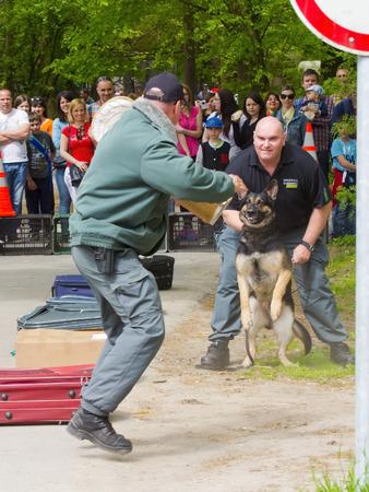 excise: Szeged, Ungheria - 26 aprile 2015 - ufficiale di accise (NAV) detiene una presendation con un cane da lavoro in caso 'Giorno di terra' a Szeged Zoo.