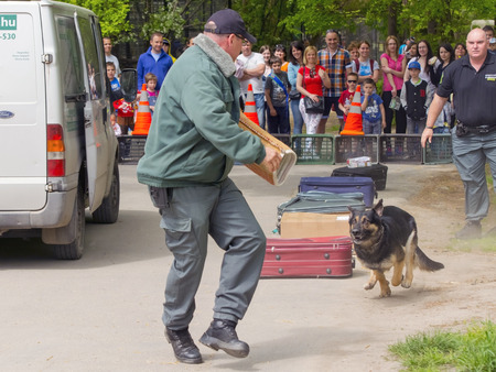 szeged: SZEGED, HUNGARY - APRIL 26. 2015 - Excise officer (NAV) holds a presendation with a working dog in the Earth day event in Szeged Zoo.