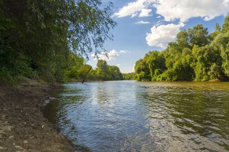riverside tree: Bank of the Maros River in Hungary