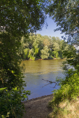 riverside trees: Bank of the Maros River in Hungary