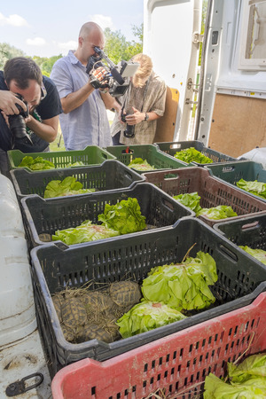 confiscated: SZEGED, HUNGARY - JULY 14. 2015 - Hungary resend the confiscated Hermanns tortoises to Bulgaria from Szeged Zoo, photographers are in action