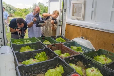 confiscated: Szeged, Ungheria - 14 luglio 2015 - Ungheria inviare nuovamente le tartarughe di Hermann confiscati a Bulgaria da Szeged Zoo, fotografi sono in azione