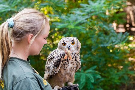 bengalensis: SZEGED, HUNGARY - OCTOBER 4. 2015 - Birds of prey show with Indian eagle-owl (Bubo bubo bengalensis) in Szeged Zoo, Hungary