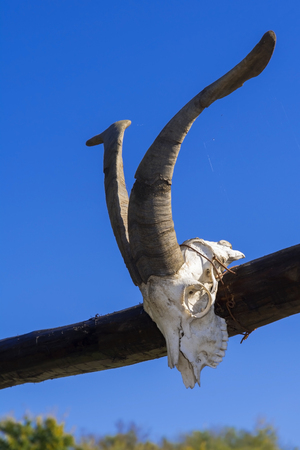 farmyard: Goat skull on the gate in a farmyard, Hungary