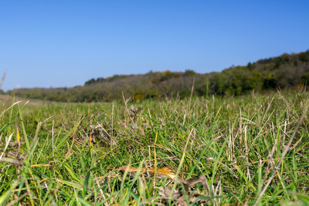 low perspective: Low perspective pasture view photo near Balatonkenese, Hungary Stock Photo