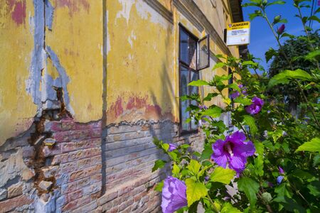 ruined: Old ruined house with flower in Szekszard, Hungary Stock Photo