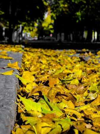 szeged: Leaf litter in Autumn in a park of Szeged, Hungary