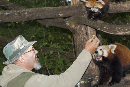 Red panda Editorial