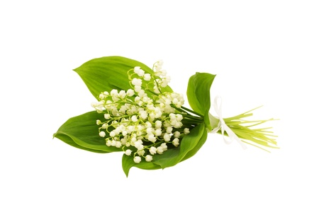 Bouquet of lily of the valley on white