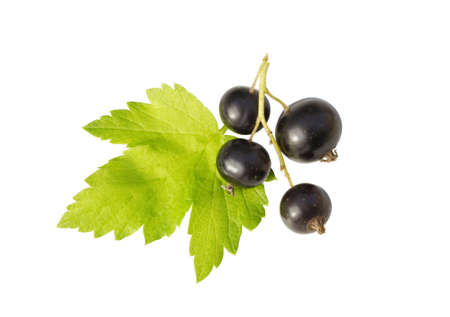 blackcurrant and  leaf  isolated on white Stock Photo