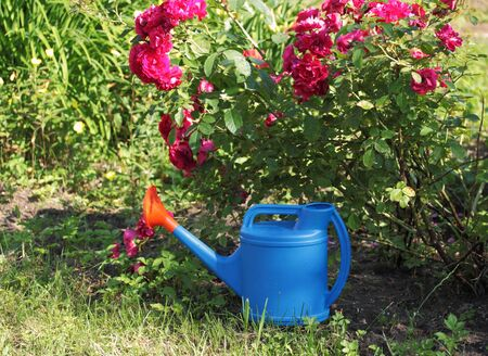 Watering can, concept of gardening and hobby