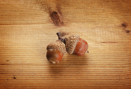 Two autumn acorns on wooden background  Stock Photo