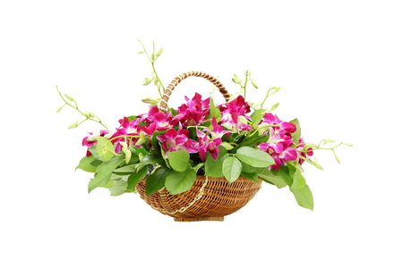 Bouquet orchid flowers in basket isolated on white
