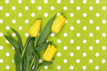 Yellow tulips on green textile background Stock Photo