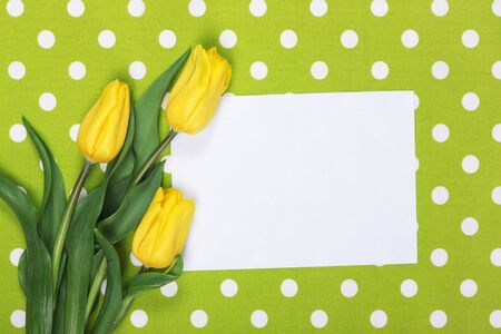 Yellow tulips on green textile background and empty blank