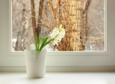 white hyacinth on window sill