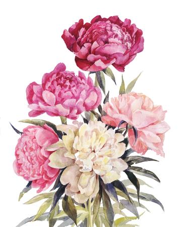 牡丹水彩画の花束。ヴィンテージのグリーティング カードのイラストを手描き