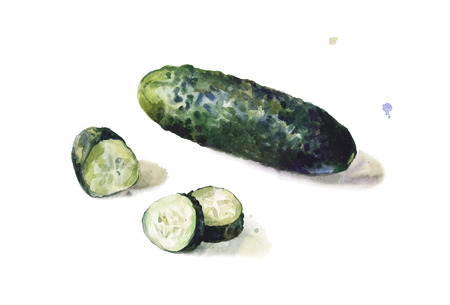 pimples: Isolated cucumber in watercolors on white background