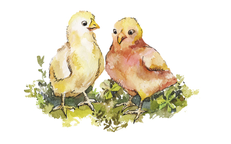 chicken coop: A couple of cute chickens on grass watercolor. Hand-drawn easter illustration for greeting card. Illustration
