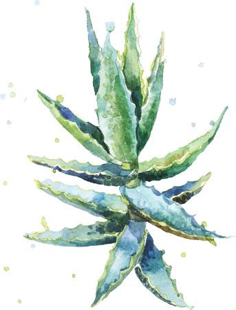 Aloe vera. Acuarela vector de aloe suculentas. Pintura a mano sobre fondo blanco. Ilustración de vector