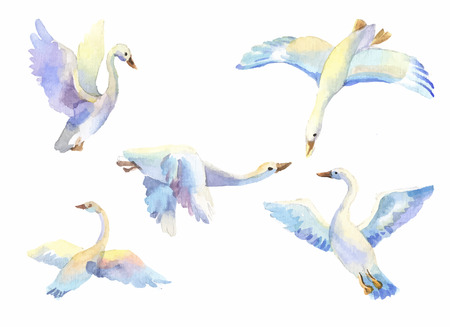 drawing an animal: flying swans in light color watercolor. Set of bird flying in different poses. Birds in passage, wild birds, symbol of freedom, love, loyalty, family, wildlife