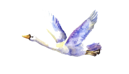watercolor illustration of flying swan. Hand drawn element, symbol of love, freedom and fidelity