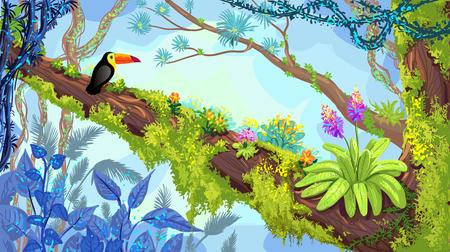 ジャングルの森。木の上に座ってオオハシのイラスト。ベクトル手描き熱帯雨林、熱帯の背景