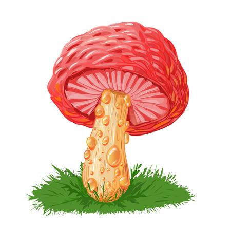 Rhodotus palmatus, rare mushroom. Pink mushroom isolated on white.