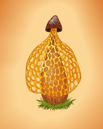 veiled: Rare yellow mushroom illustration. Dictyophora indusiata.Tropical Stinkhorn mushroom, Phallus indusiatus. Cartoon fungus. Illustration