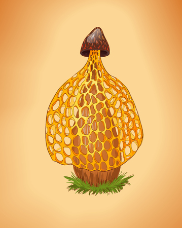 Rare yellow mushroom illustration. Dictyophora indusiata.Tropical Stinkhorn mushroom, Phallus indusiatus. Cartoon fungus. Illustration