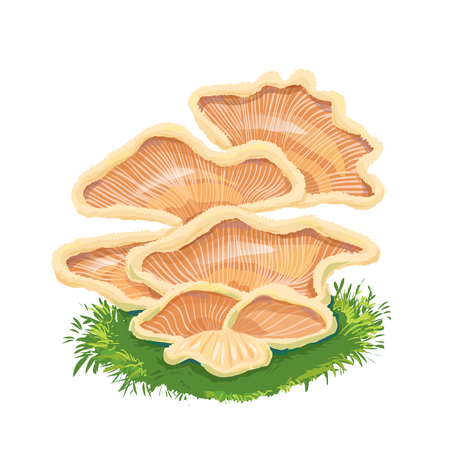 Heap plate of mushrooms, mushroom family on grass, an icon with a few mushrooms.Fungi like armillaria, oyster, chanterelle.