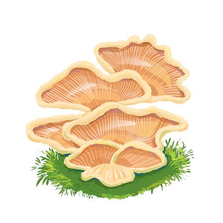 few: Heap plate of mushrooms, mushroom family on grass, an icon with a few mushrooms.Fungi like armillaria, oyster, chanterelle.
