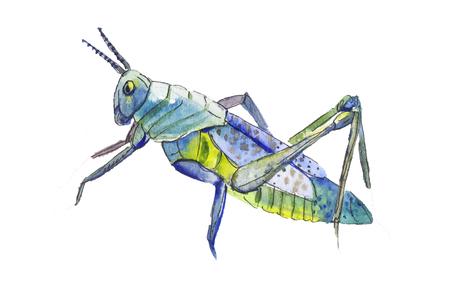 langosta: ilustraci�n langosta azul. Dibujado a mano la langosta azul. Langostas aislados en blanco. saltamontes azul.