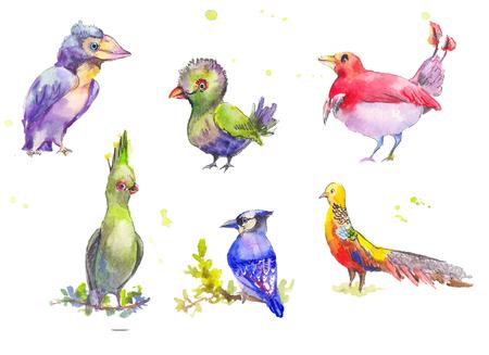 fantastic: Fantastic birds watercolor set. Tropical fantastic set of multicolored birds in watercolor painting. Watercolor sketch of fantastic birds.