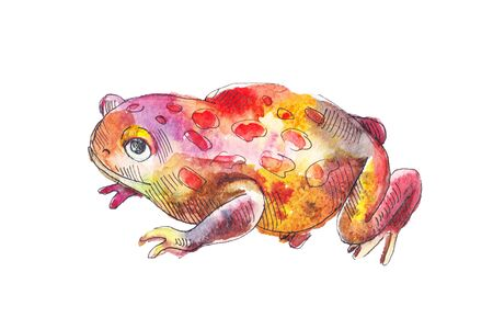 red frog: Red toad. Watercolor sketch of red toad. Hand drawn red frog. Stock Photo