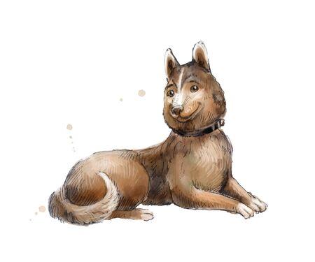 mongrel: Cute brown mongrel watercolor illustration of brown mongrel.
