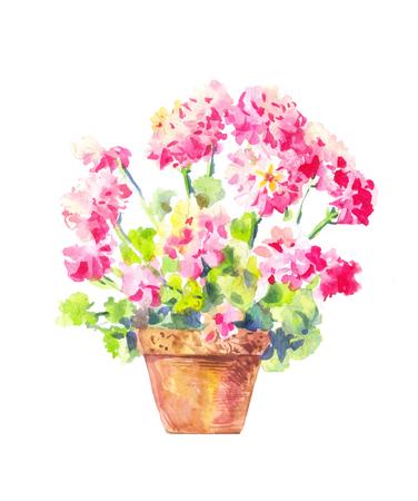 Geranium watercolor illustration, isolated on white