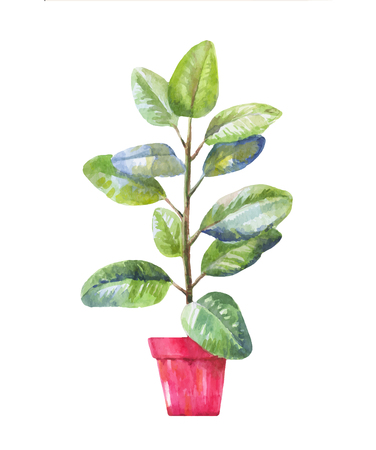 pipal: pipal illustration. Pipal in a pot. Potted pipal in watercolor