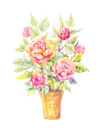 rose bush: Rose potted illustration. Potted rose in watercolor. Sketch of bush of roses in a pot. Sketch of roses bouquet.