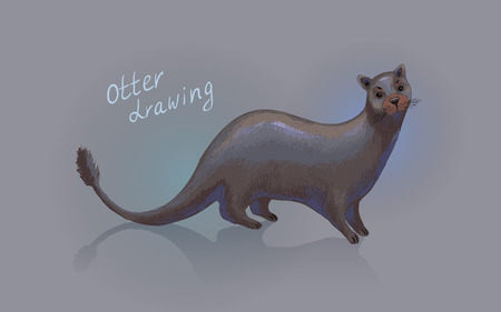 otter: Otter. Vector drawing. Hand-drawn sketch or illustration.