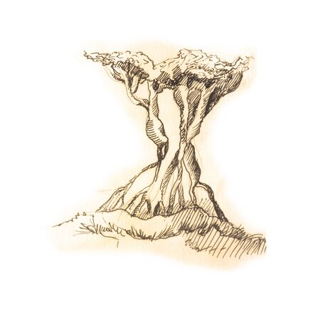 tree sketch in old vintage drawing style, isolated on white