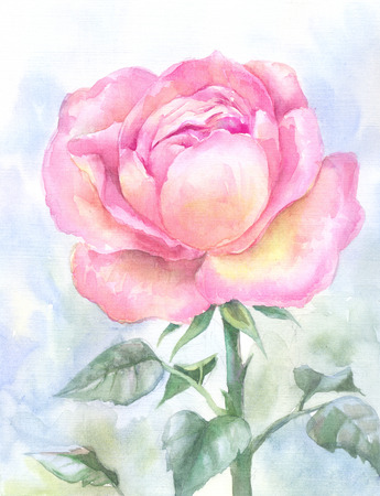 original single: pink garden rose, watercolor painting. Hand-drawn sketch, illustration suit for poster, cover notebooks, invitation to the wedding, wallpaper, floral background