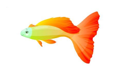 orange fish, vector illustration isolated