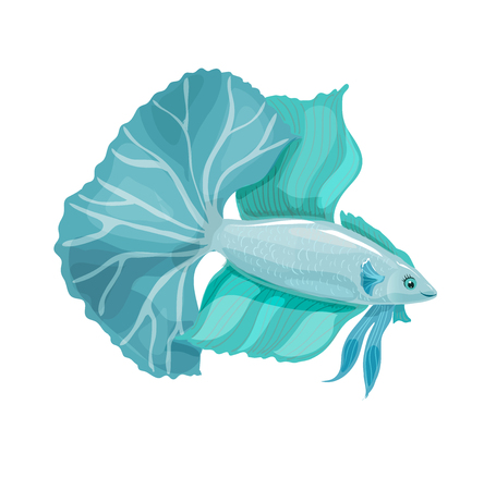 Aquarium vector fish with a big tail. Betta bellica Illustration