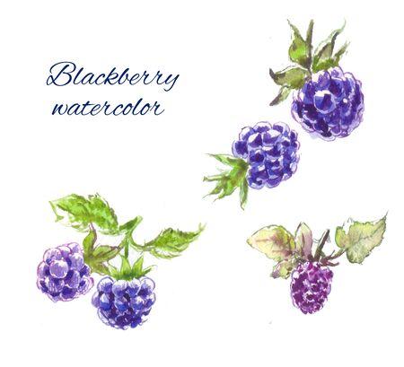 dewberry: blackberry watercolor