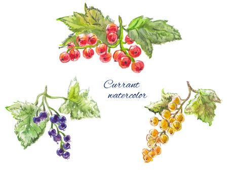 currant: yellow, red and black currant. Watercolor set, sketch or drawing