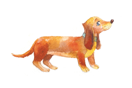 Dachshund watercolor isolated on white. Cute brown dog, hand-drawn illustration. Drawing suit for childish book, printing on clothes.